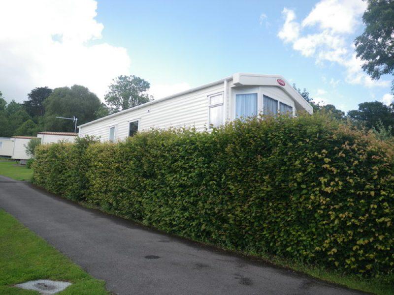 Timberline Hedge